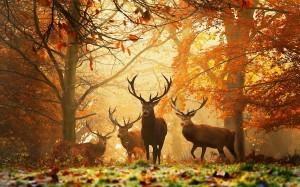 6982217-deers-autumn